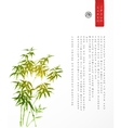 Design template with bamboo trees vector image