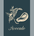 avocado fruitseed and branch vector image vector image