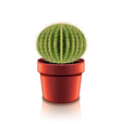 cactus isolated vector image vector image