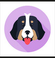 canine face of bernese mountain dog flat design vector image vector image