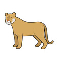 cougar vector image vector image