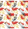 Watercolor waxwing and rowan pattern vector image