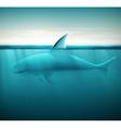 Shark in ocean vector image