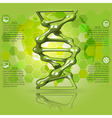 green infographics DNA vector image