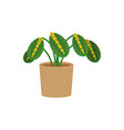 maranta potted flat icon indoor plant flower vector image vector image