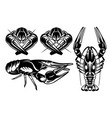 monochrome set with various river crayfish vector image