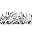 seamless border with monochrome wild plants vector image vector image