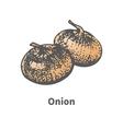 sketch hand-drawn yellow onion vector image