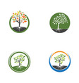 tree branch illustration design vector image