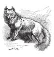 Arctic Fox Sketch vector image vector image