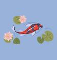 asian japanese koi fish swimming in pond japan vector image