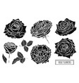 hand drawn floral decorations vector image vector image