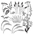 wild herbs and cereals silhouette set vector image