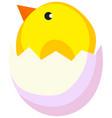 cartoon new born chicken chick icon poster vector image vector image