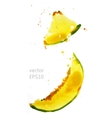 slices melon vector image vector image