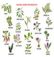 Best natural herbs for pain relief