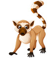 brown lemur with happy face vector image