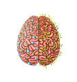 creative and logical human brain parts development vector image