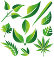 Leaf icon graphic set vector image vector image