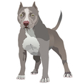Pit Bull vector image vector image