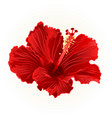 red hibiscus simple tropical flower vintage vector image vector image