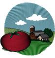 tomato scene color vector image vector image