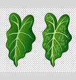 two patterns on green leaves vector image vector image