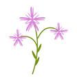 coronaria flower flat icon wild flowers plant vector image vector image