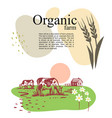 cow chewing grass background farm village vector image vector image