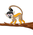 Cute caphucin monkey isolated on white background vector image vector image