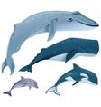 Set marine mammals Blue whale sperm whale vector image