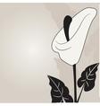 calla lilies vector image vector image