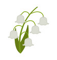 lily valley flower flat icon wild flowers vector image vector image
