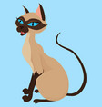 siamese cat sitting isolated on blue vector image vector image
