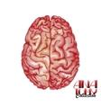 Anatomy collection - brain vector image