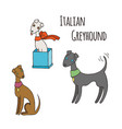 italian greyhound cartoon dog set vector image