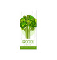 original label template with green broccoli fresh vector image vector image