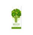 original label template with green broccoli fresh vector image vector image