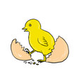 chick hatching inside egg drawing vector image