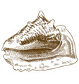 engraving drawing of big conch shell vector image vector image