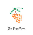sea buckthorn berry icon vector image vector image