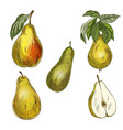 five pears design elements vector image
