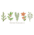 christmas plant branch set holly mistletoe vector image vector image