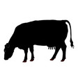cow grazing silhouette isolated farm animal vector image
