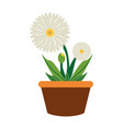 flower plant vector image