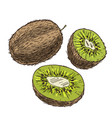 kiwi with halves of fruits full color sketch vector image vector image