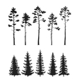 set with pine trees isolated on white vector image vector image