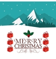 Berry and leaves of Christmas season design vector image vector image