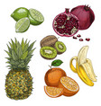 tropical fruits pineapple lime pomegranate vector image vector image