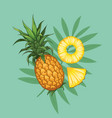 whole pineapples with slices hand drawn design vector image